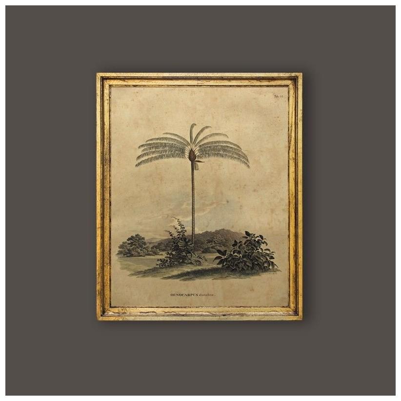 Cuadro palmera Oenocarpus