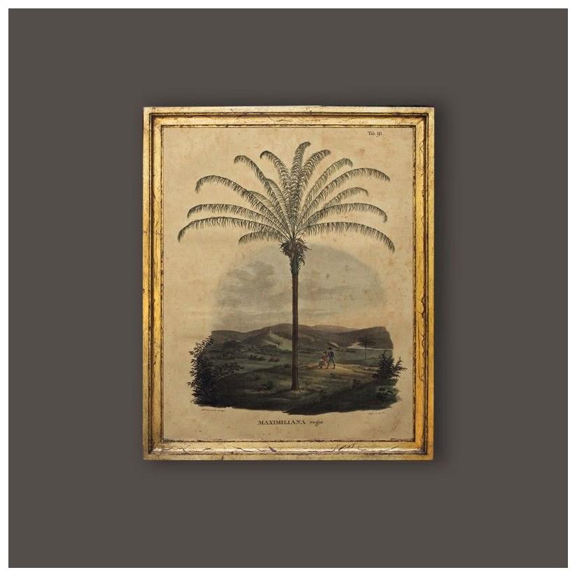 Cuadro palmera Maximiliana