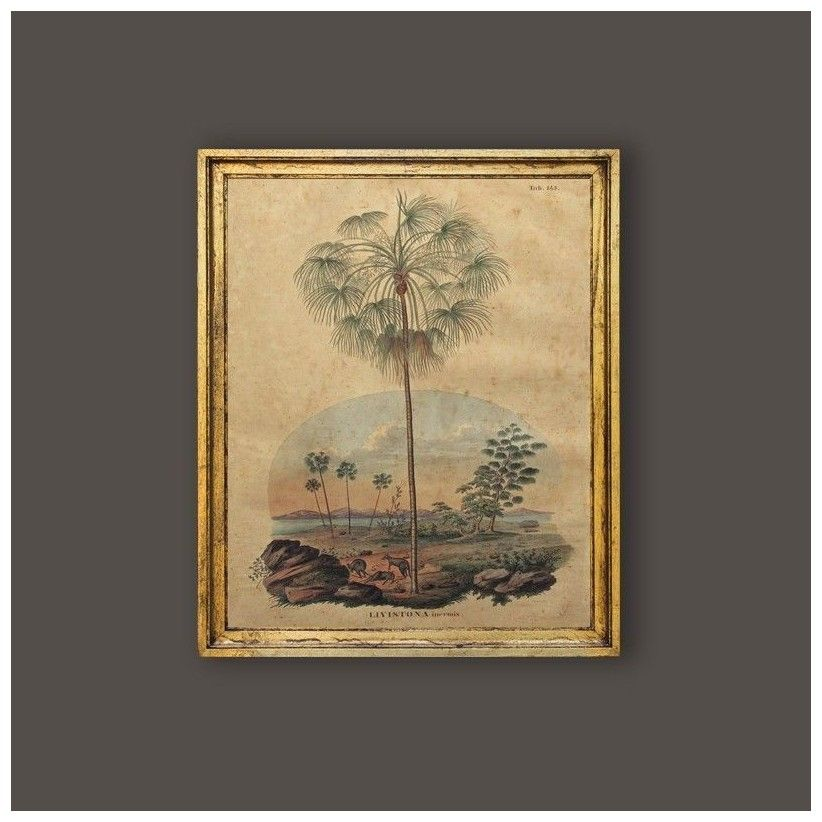 Cuadro palmera Livistona inermis