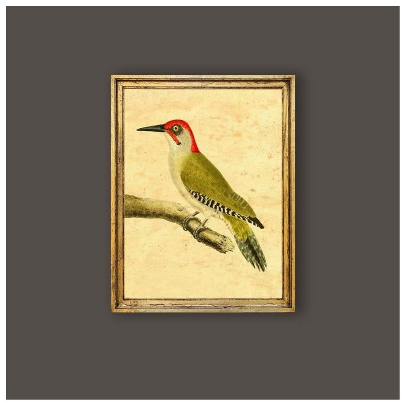 Cuadro pájaro carpintero