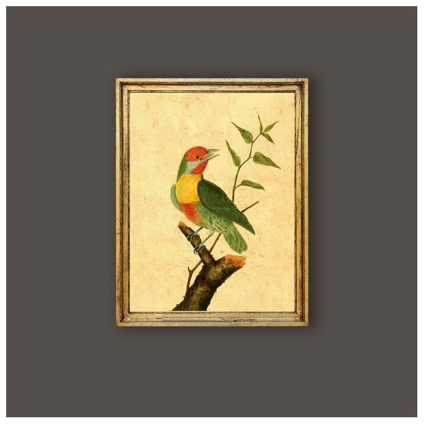 Cuadro pájaro Barbudo de Maynas