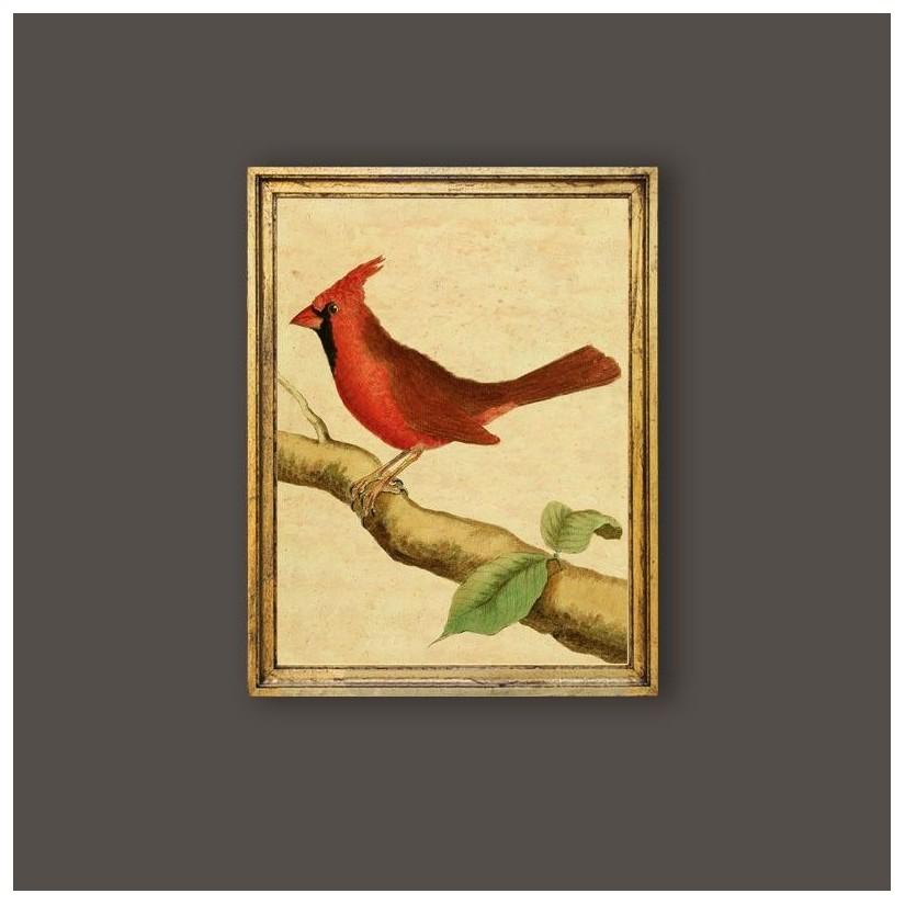 Cuadro pájaro Cardenal norteño