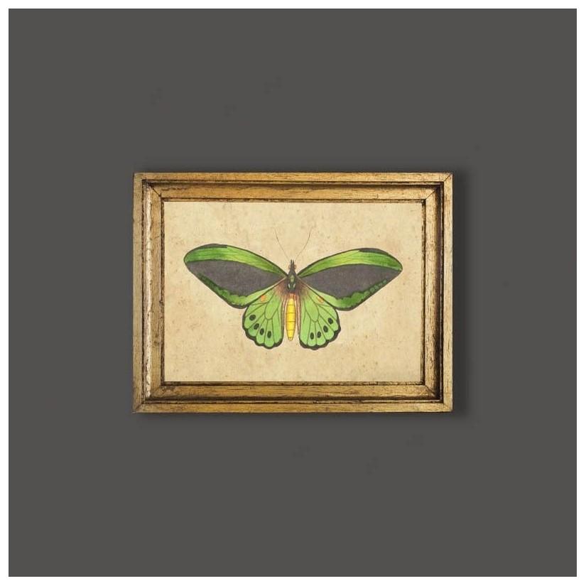 Cuadro mariposa verde oscuro