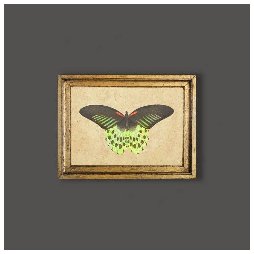 Cuadro mariposa tonos verdes