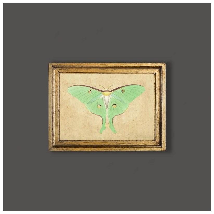 Cuadro mariposa verde claro