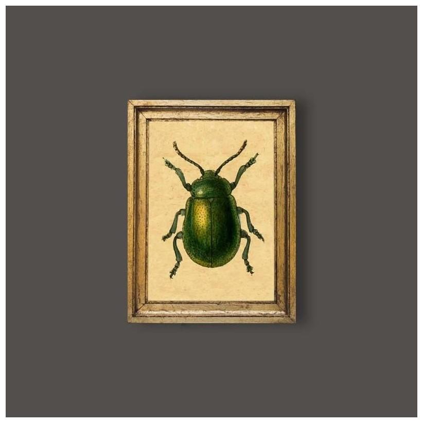 Cuadro escarabajo verde