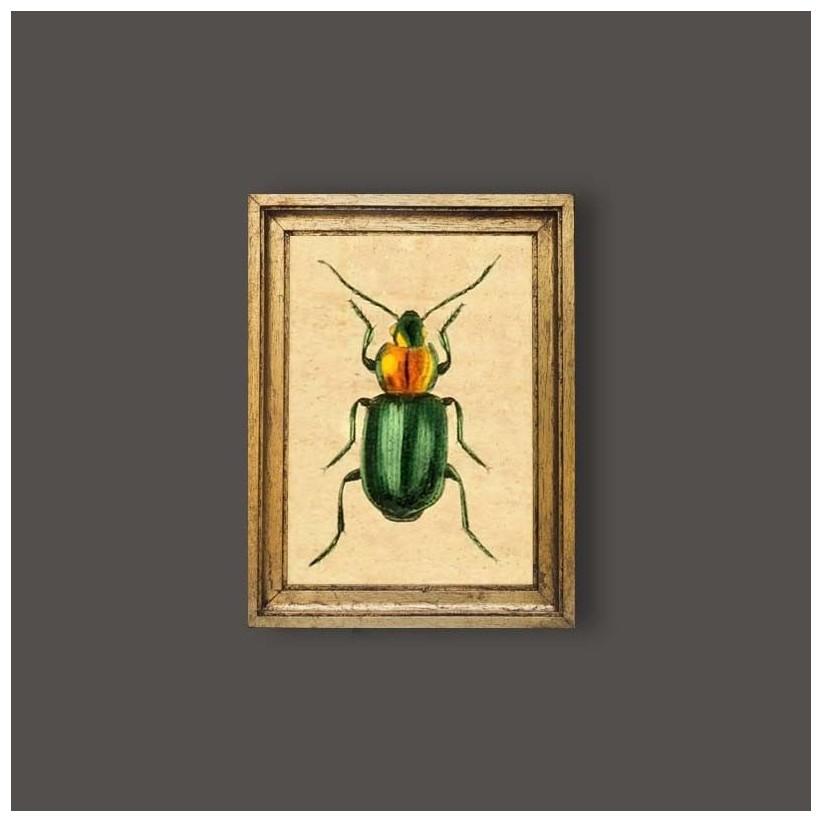 Cuadro escarabajo verde oro