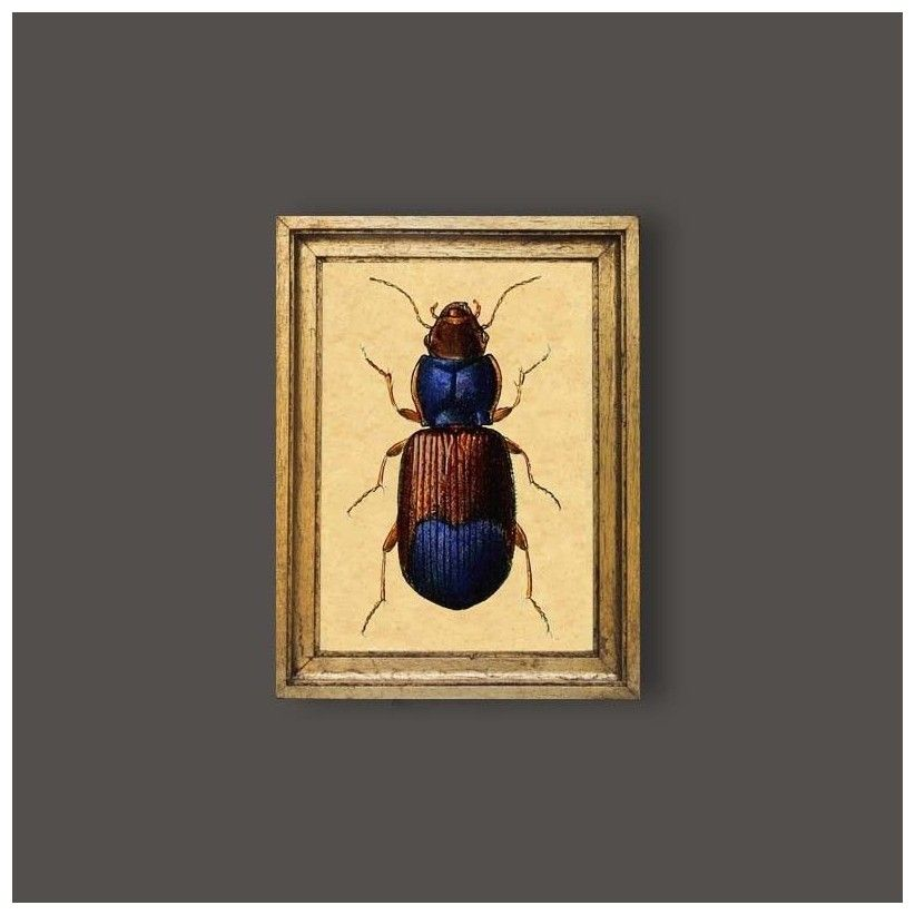 Cuadro escarabajo azul