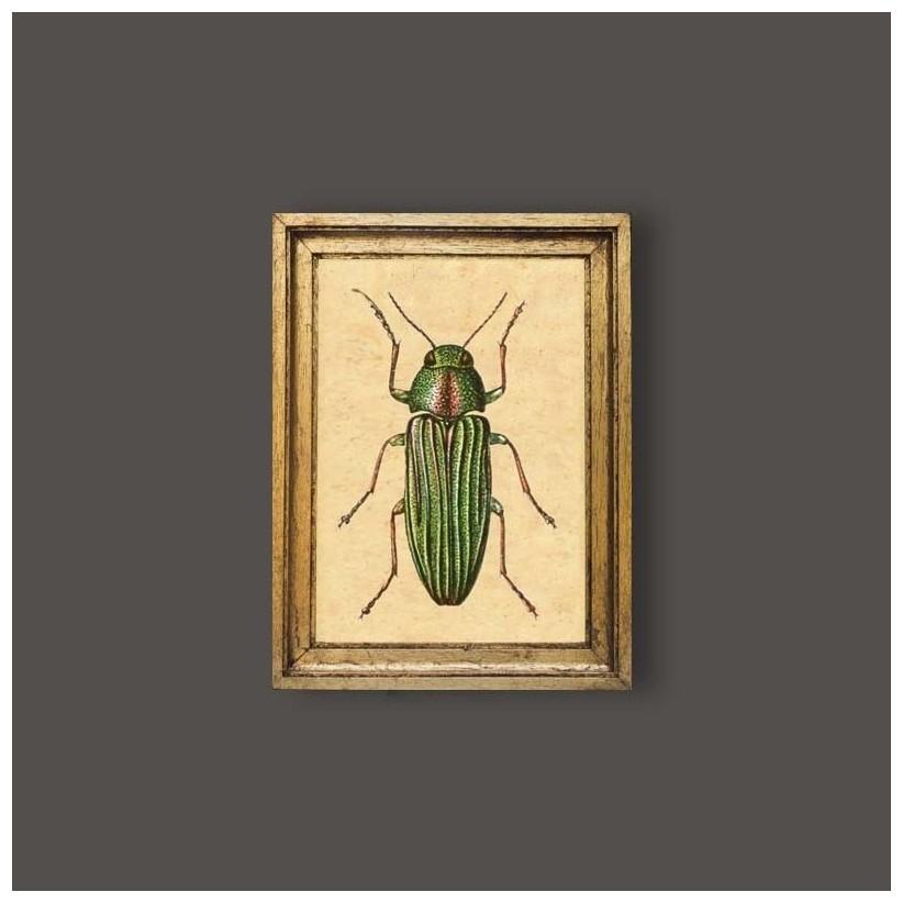 Cuadro escarabajo verde rayas