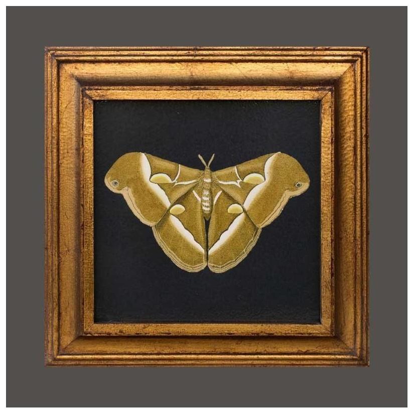 cuadro oro mariposa dorada