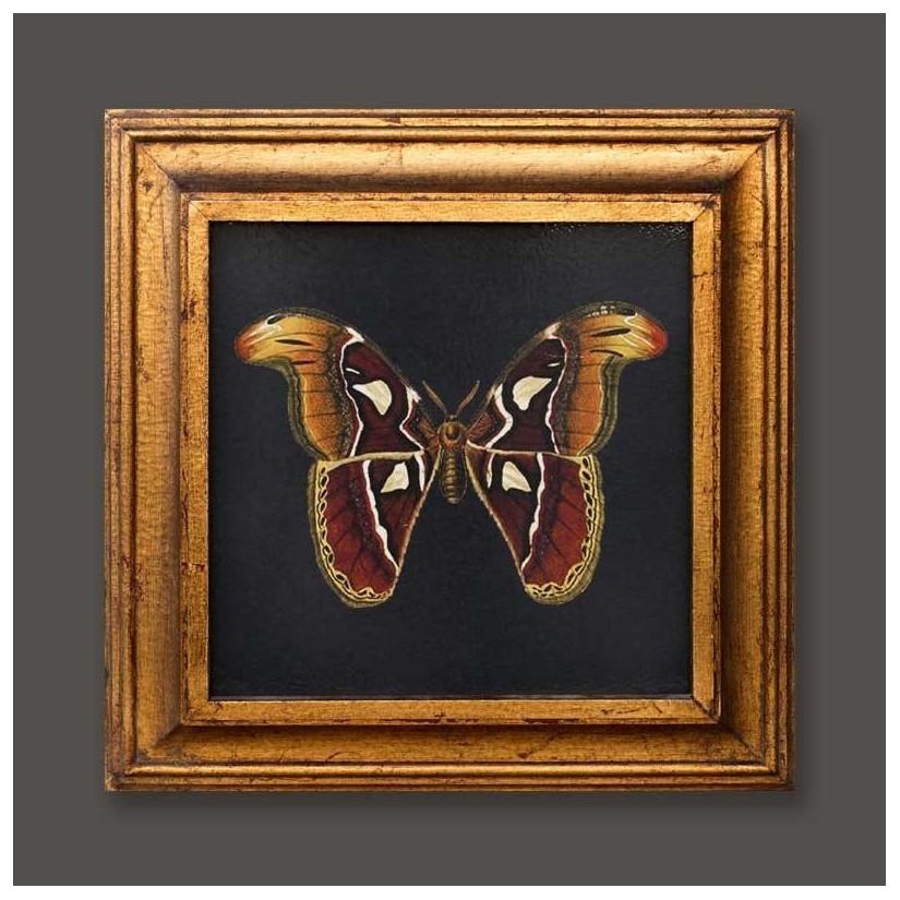 cuadro oro mariposa atlas