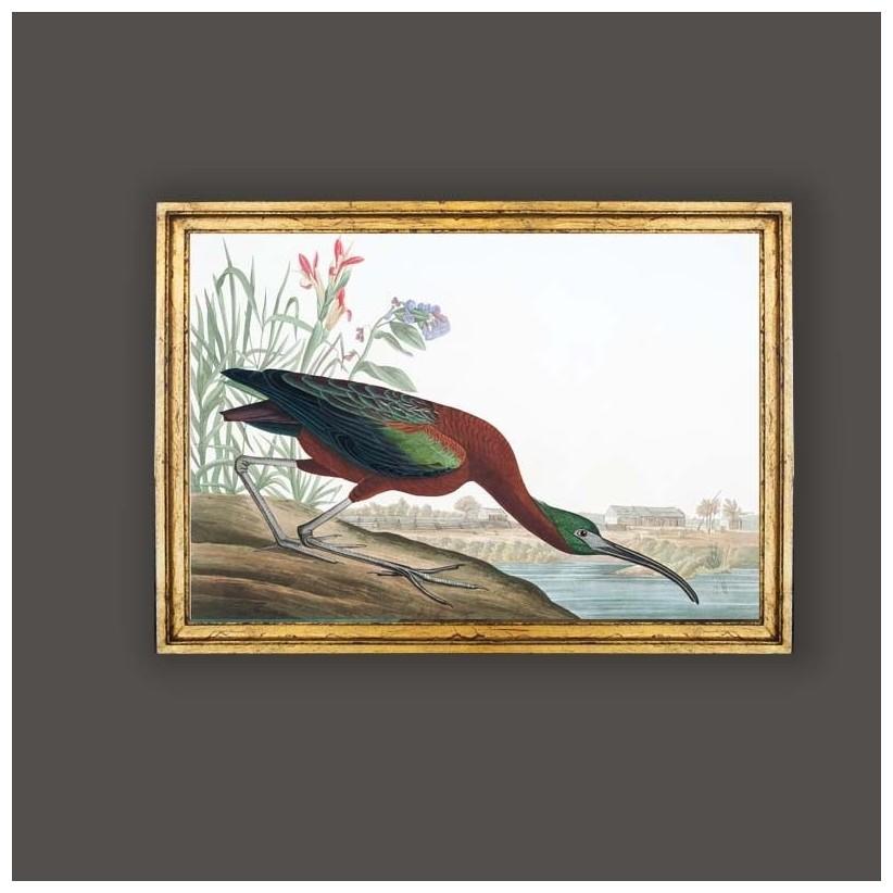 cuadro oro aves ibis