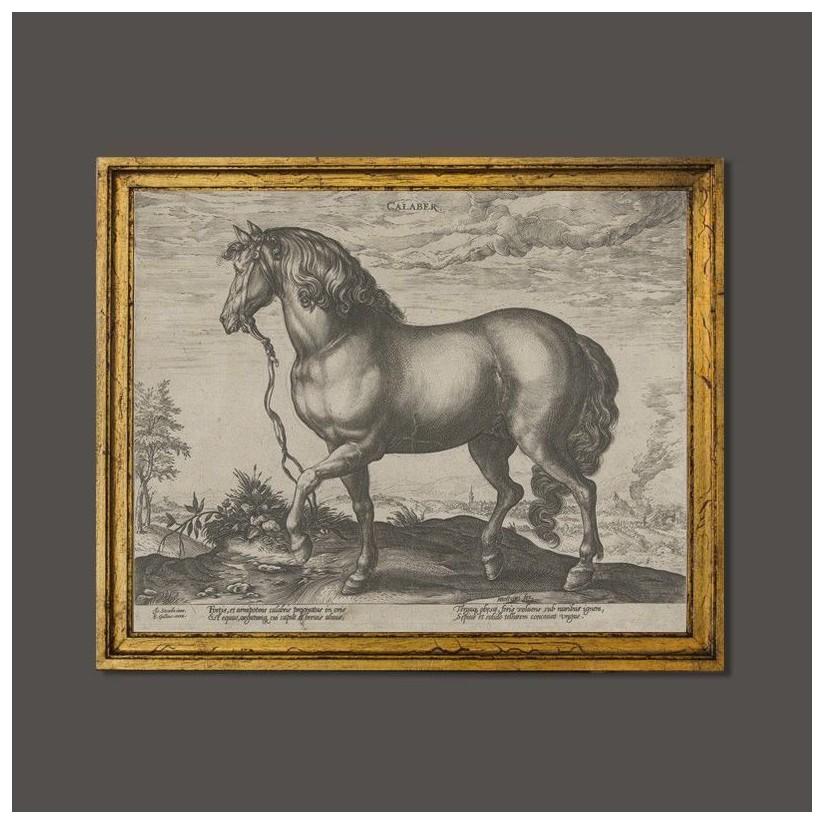 Cuadro de caballo de calabria