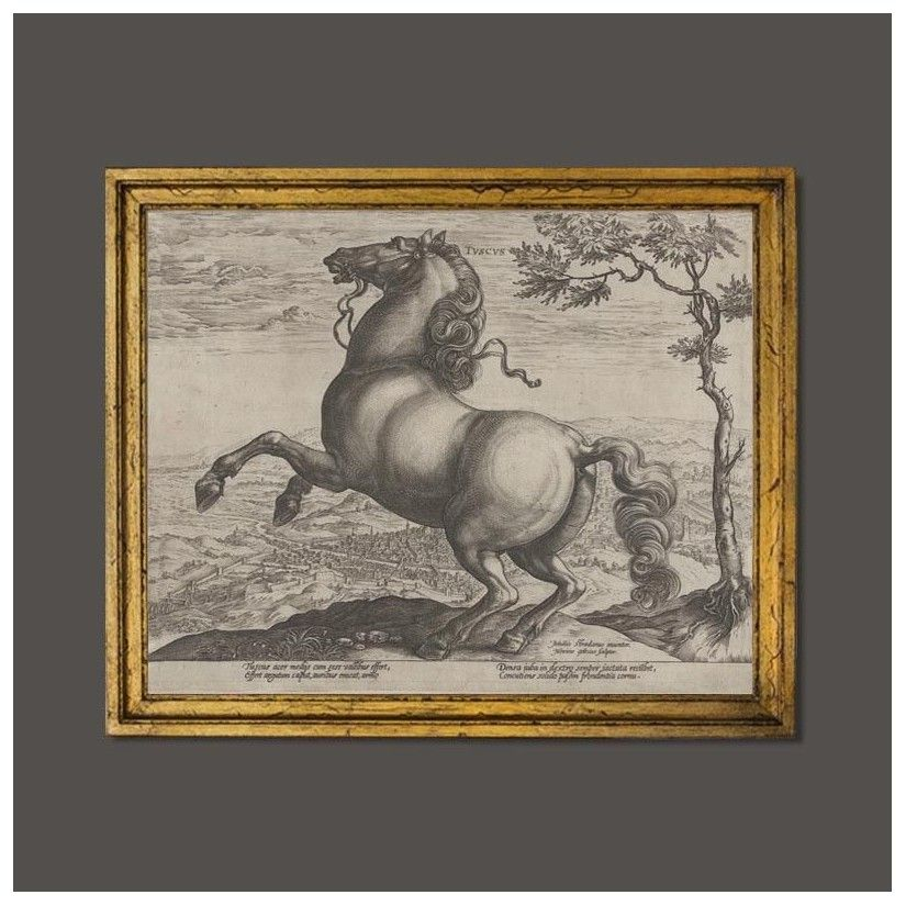 Cuadro caballo Toscano