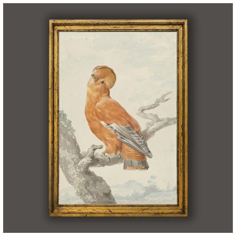 Cuadro clasico marco oro ave exotica
