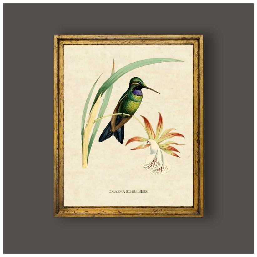 cuadro grabado aves