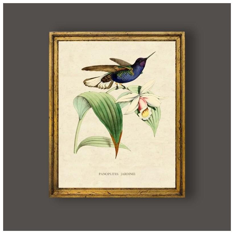 Cuadro vintage colibri