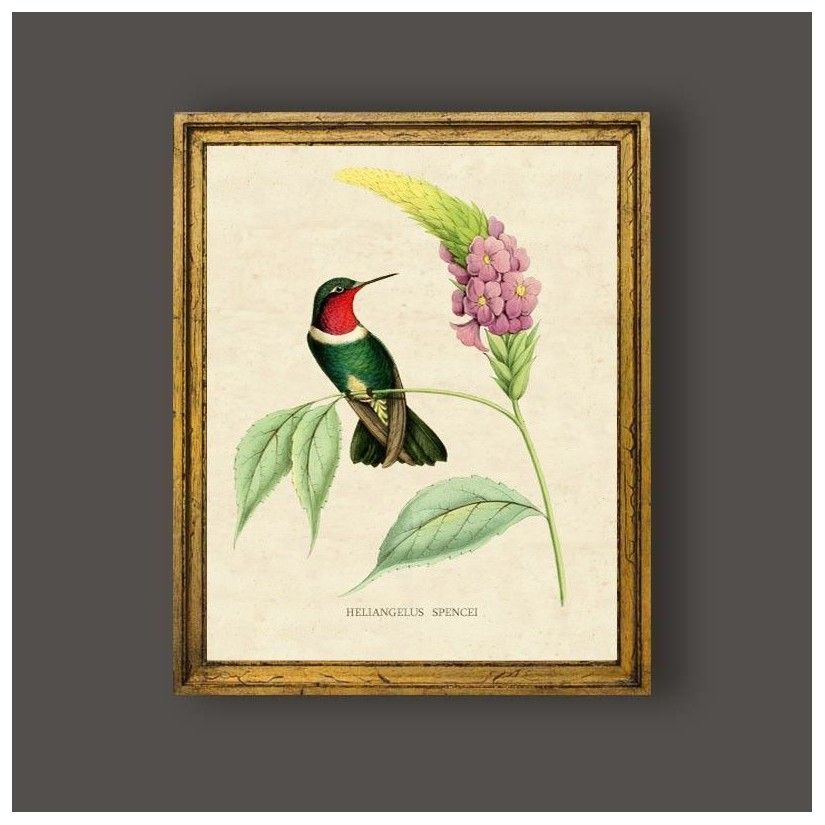 Cuadro clásico ave colibrí