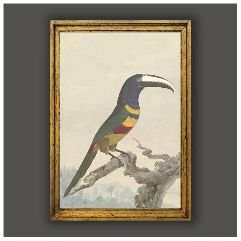 Cuadro oro clasico tucan