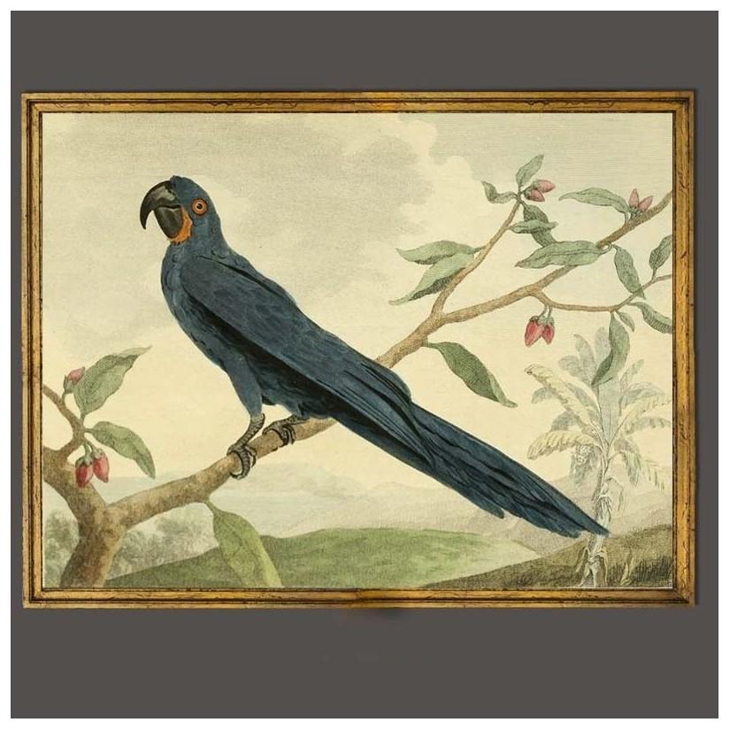 cuadro oro papagayo azul
