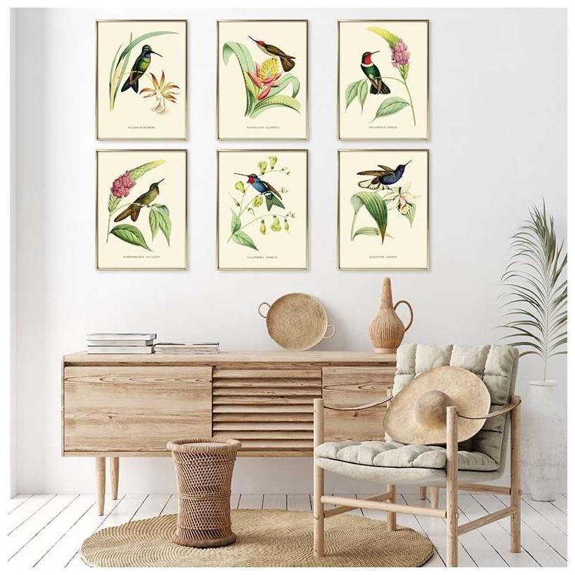 Colección cuadros colibris