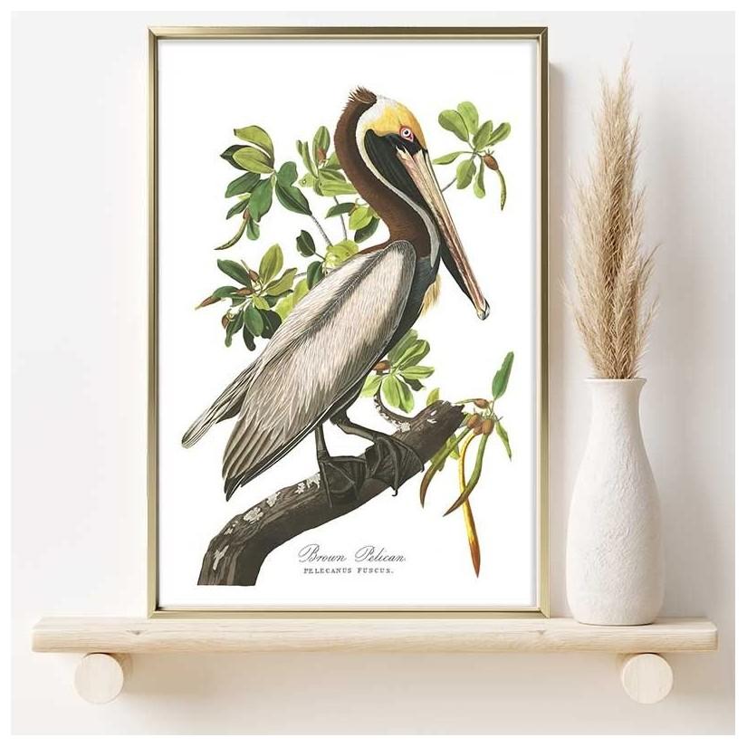 Cuadro oro pelicano pardo del caribe