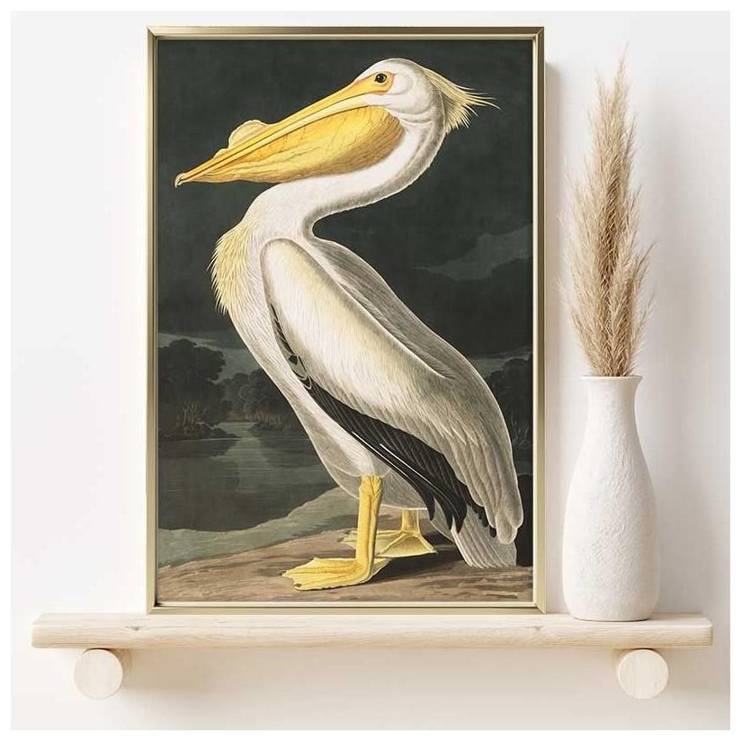 Cuadro ilustración pelicano blanco