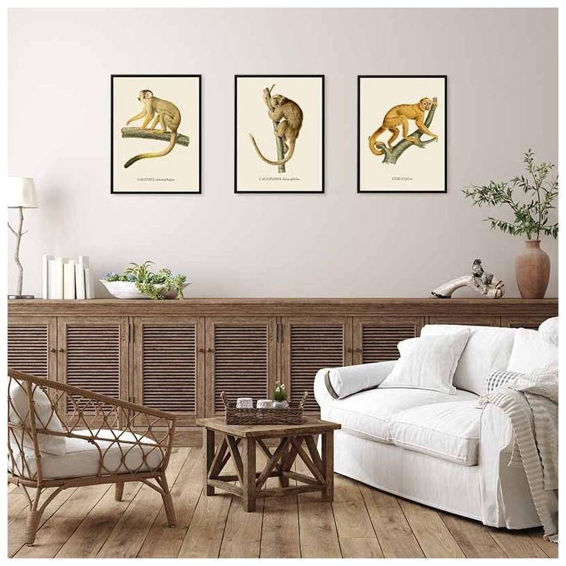 cuadros ilustraciones antiguas monos