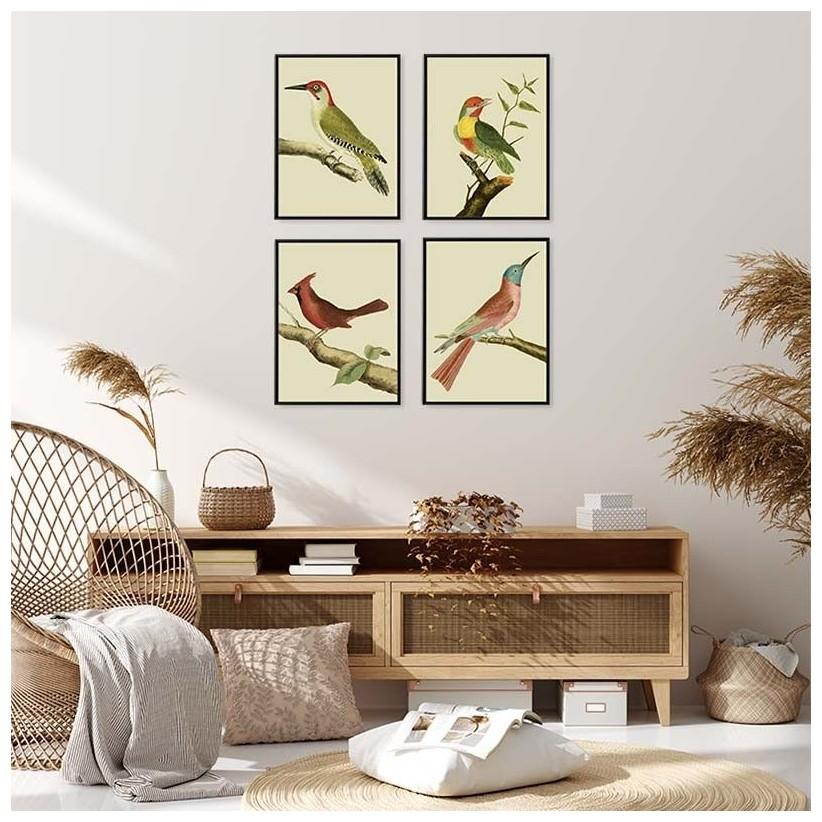 cuadros ilustraciones antiguas pájaros