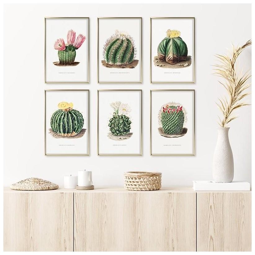 colección laminas cuadros cactus